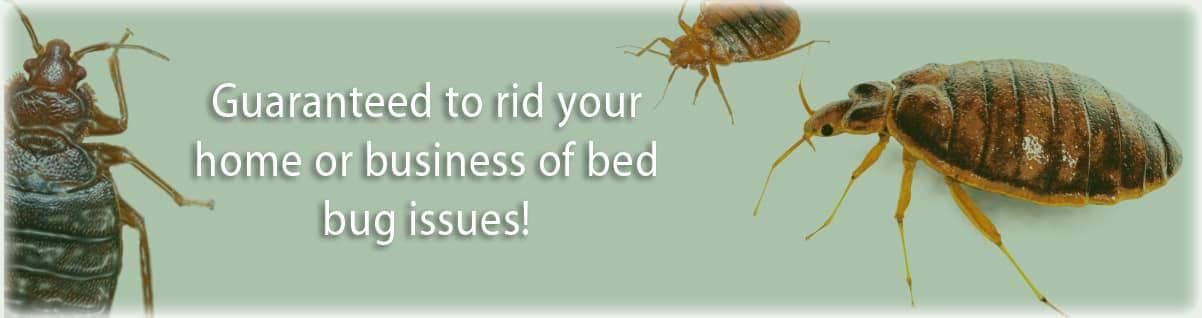 banner_bedbug