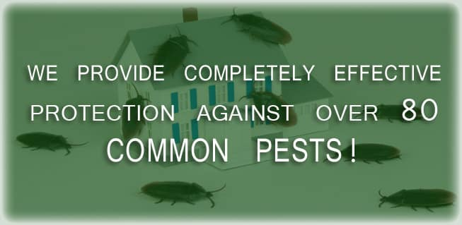 commonpests2